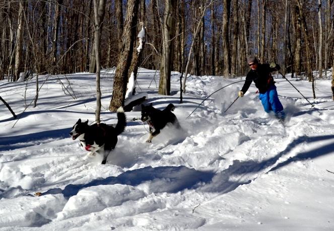 regan ski