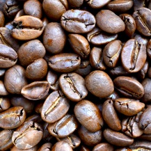Coffea spp
